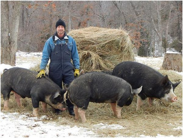 беркширские свиньи и заводчик