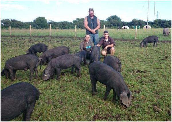 заводчики черных свиней